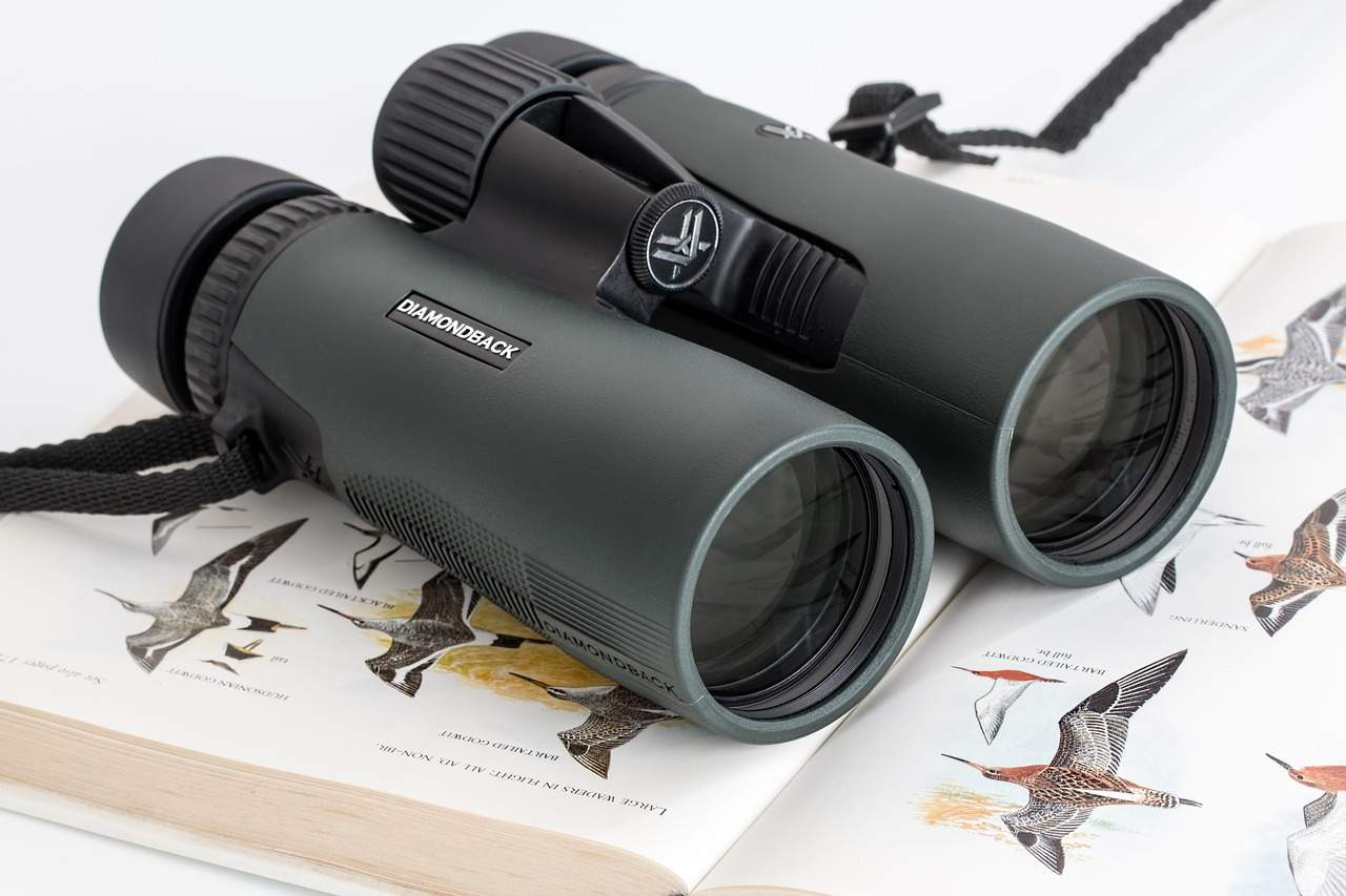 How to choose binoculars for birding